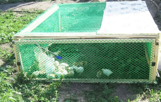 Переносной загон для цыплят своими руками