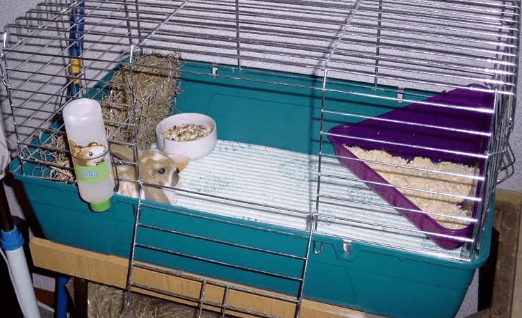 Клетки для кролей своими руками, чертежи и фото
