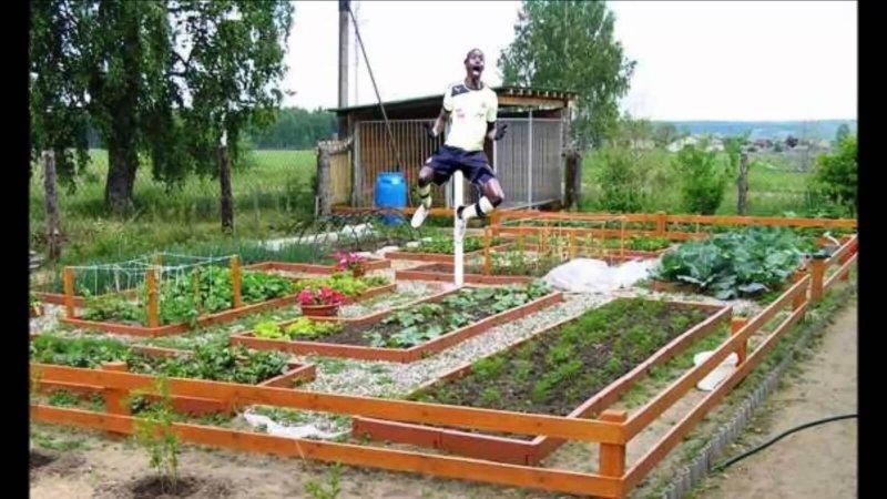 Огород своими руками посадка