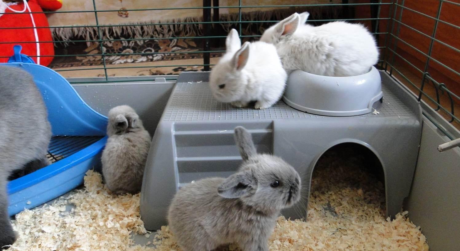 Что делать с кроликами в домашних условиях 462