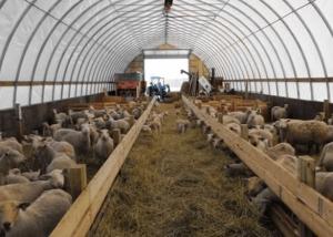 Арочный ангар для овец