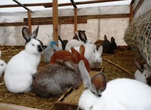 Кролики в подсобном хозяйстве