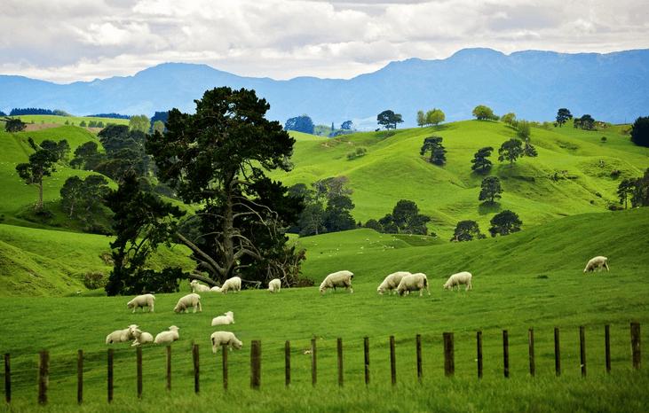 Как ухаживать за овцами: инструкции, советы, правила содержания