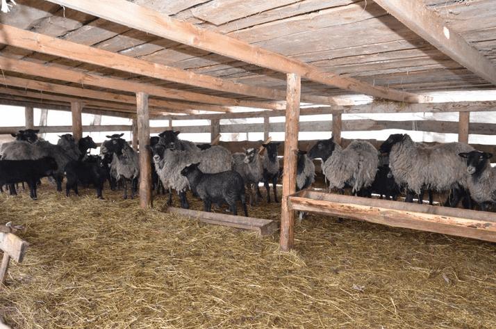 Кошара для овец: рекомендации по строительству