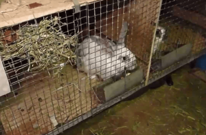 Кормление кроликов зимой в домашних условиях: корма и нормы