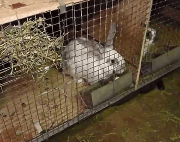 Питание кроликов в зимний период