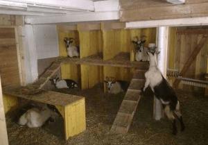 Жилище для коз