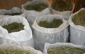 Заготовка корма для коз