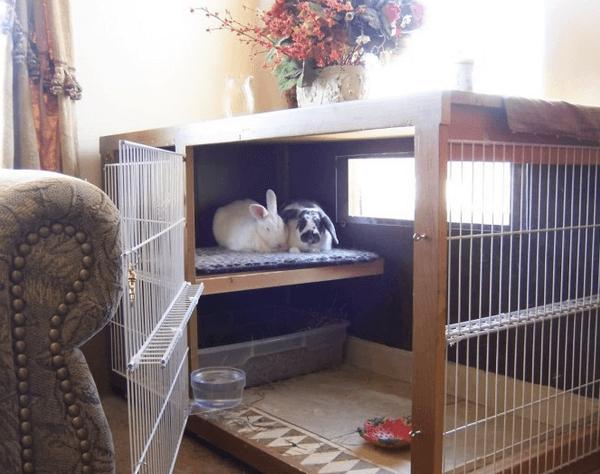 Клетка с кроликами в квартире