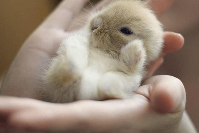 Как и чем кормить маленьких крольчат