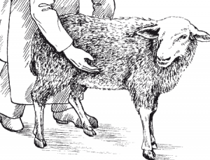 Наблюдение за овцой-маткой