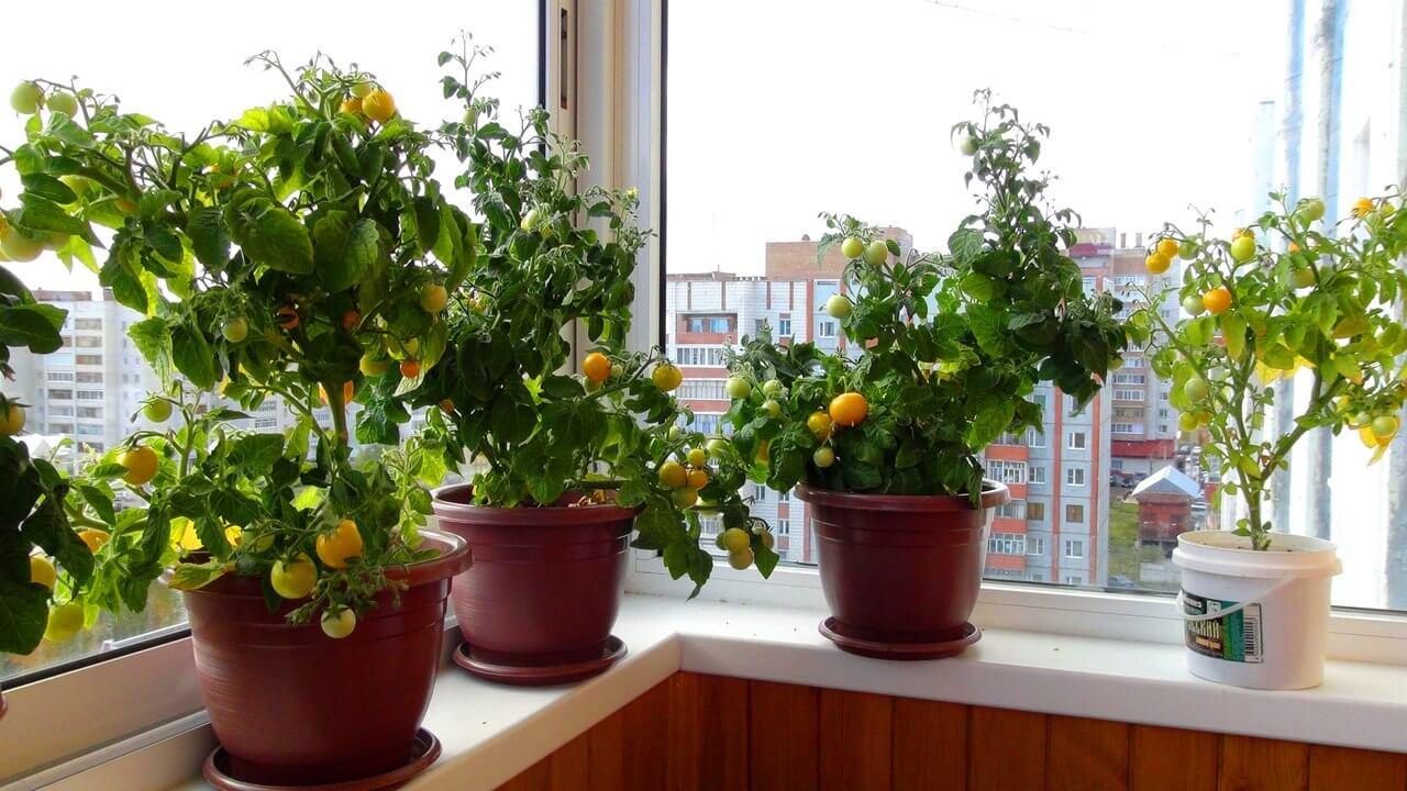 Огород на подоконнике зимой для начинающих: практические советы