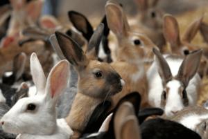 Приобретение кроликов
