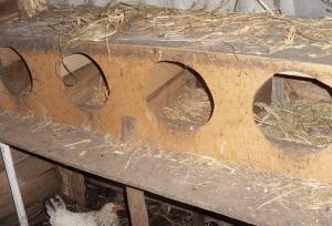 Пустые гнезда