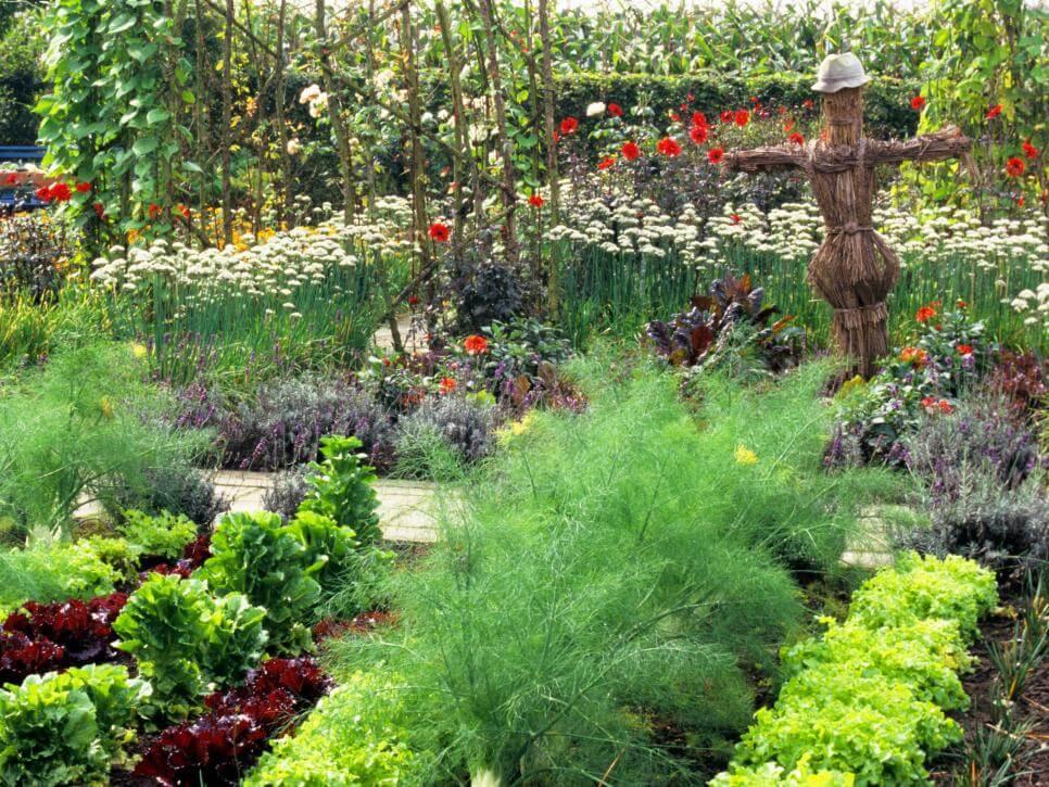Советы для сада и огорода: уход и посадка различных культур