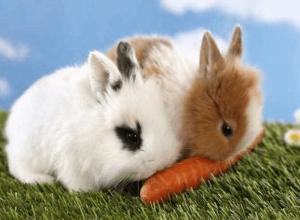 Сочный корм - морковка