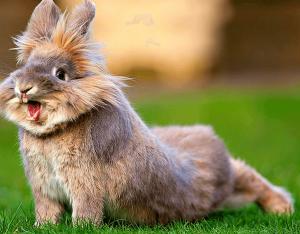Стресс у кролика