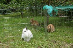 Вольеры для кролей