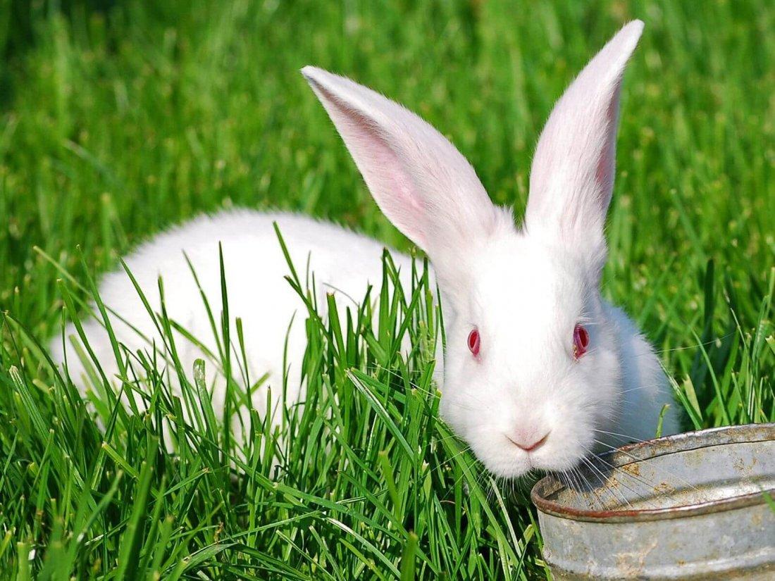Зеленая трава для животных