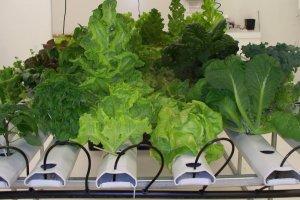 Зеленые овощи постоянно