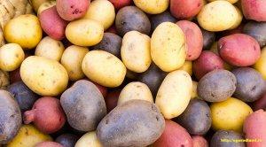 Элитная картошечка