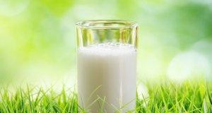 Породы коз молочных без запаха: качество молока