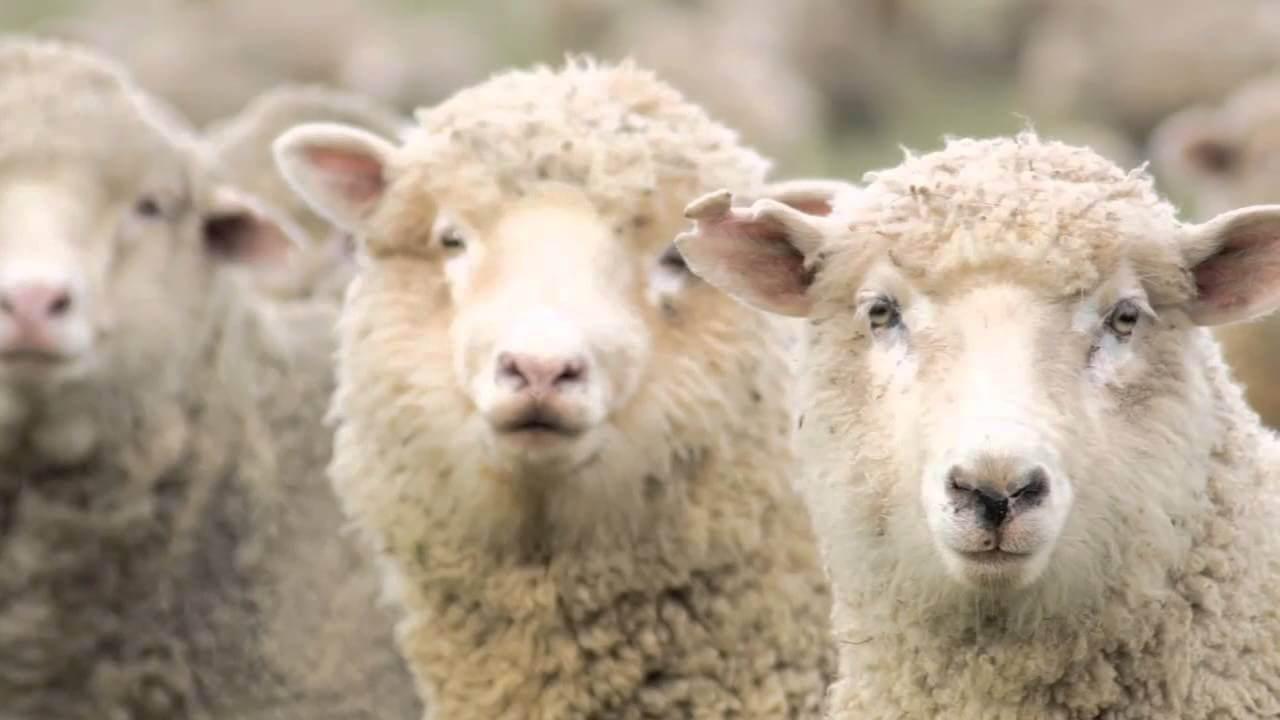 Животноводство как бизнес с нуля: с чего начать