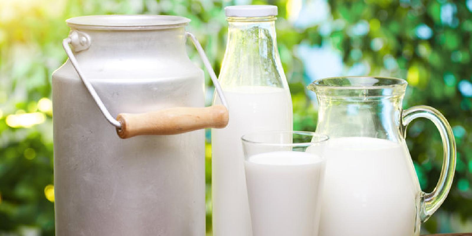 Козы молочные: как выбрать лучшие породы