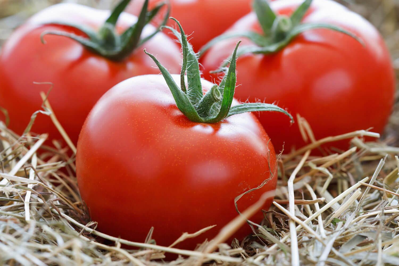 Какие удобрения для рассады помидор и перцев требуются растениям