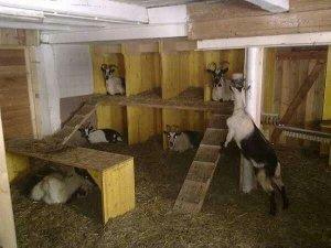 Сухое помещение для коз