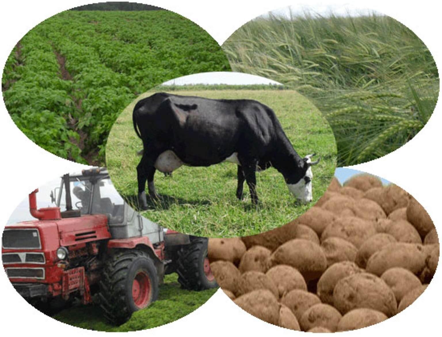Животноводство и растениеводство в России, процесс их развития