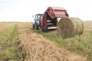 Заготовка сенажа в рулонах