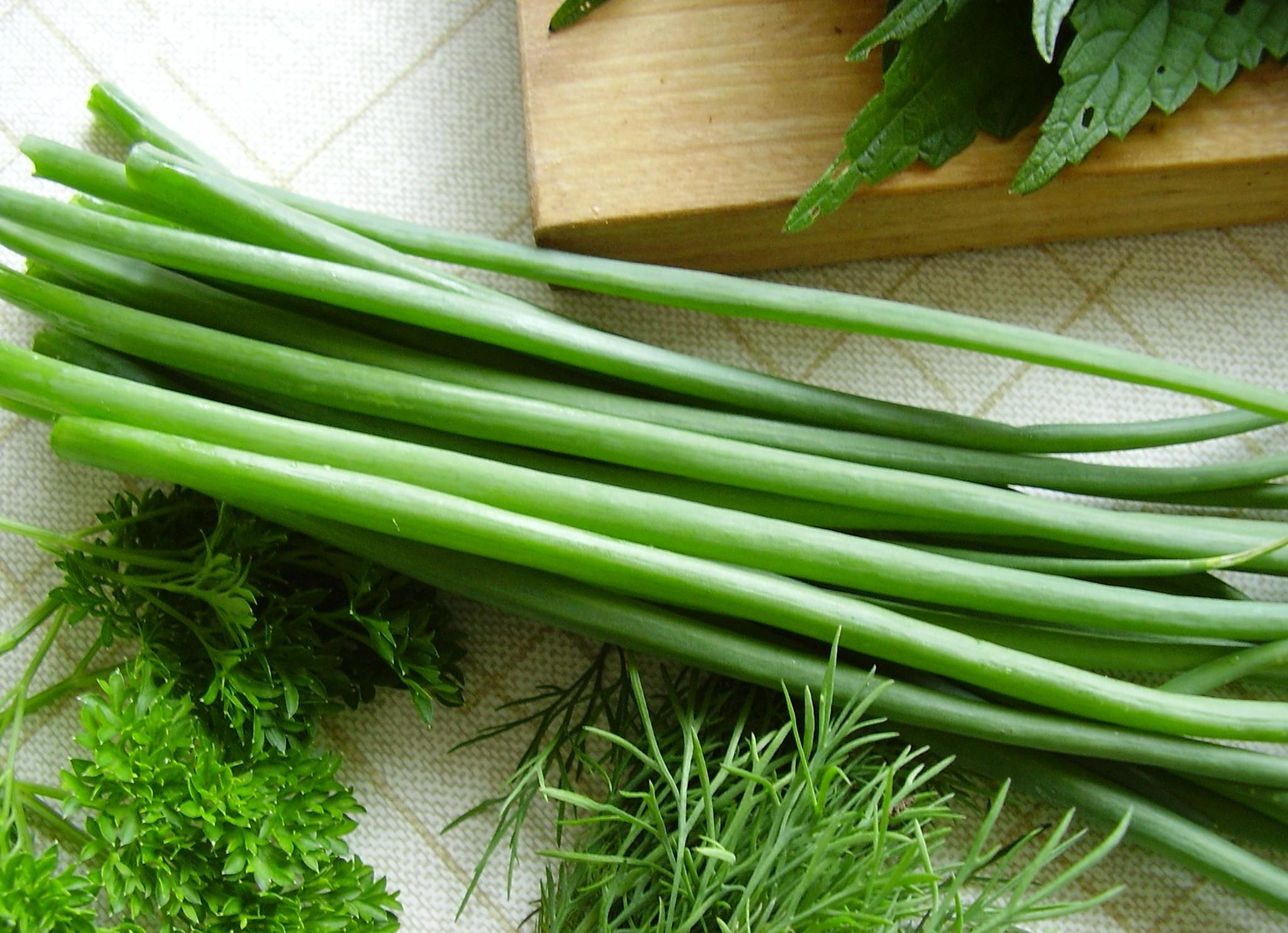 Как посадить зеленый лук на окне в бутылке, уход и подбор семян