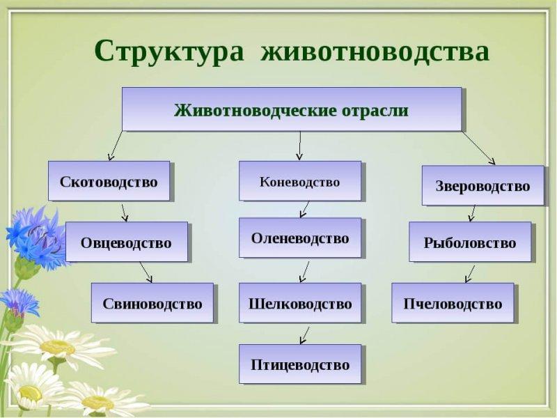 Отраслевая структура животноводства