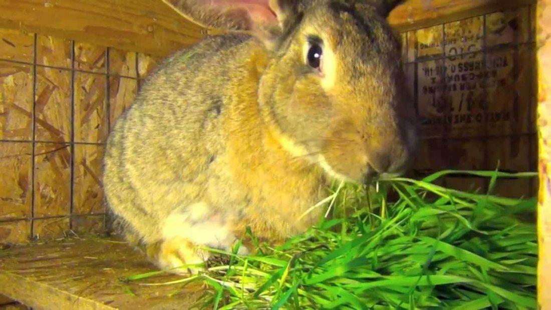 Кормление кроликов в домашних условиях