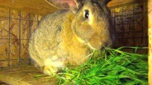 Кормление кроликов в домашних условиях для начинающих фермеров: эффективно и рентабельно