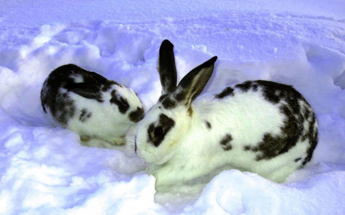 Исключение угрозы, когда крольчата зимой замерзают после окрола