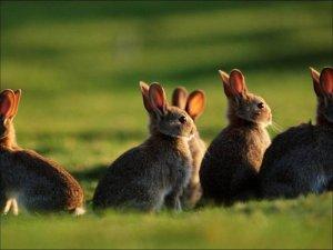 Кролики на закате