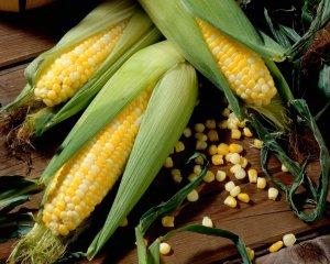 Кукуруза рассадой: когда сажать культуру в незащищенный грунт