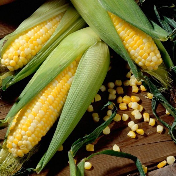 Кукуруза молочной спелости