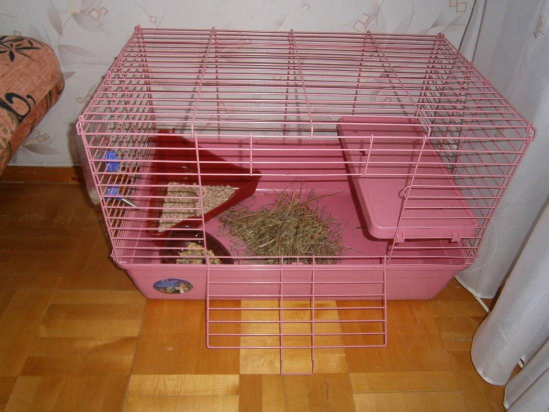 Обустройство клетки для крольчонка