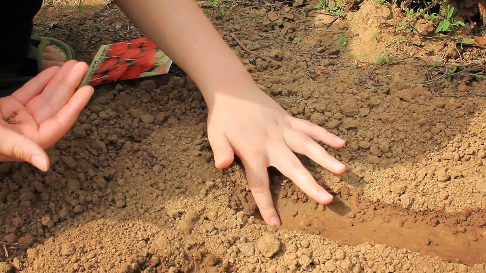 такое можно посадить редиску и землянику вместе серия термобелья