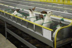 Содержание кроликов, как бизнес: затраты окупаются в течение года