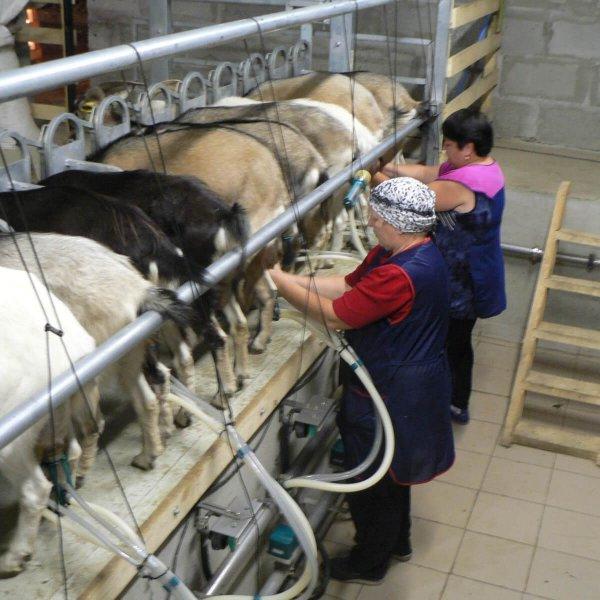 Рентабельность козоводства