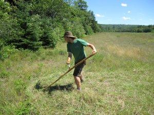 Заготовка травы для кроликов