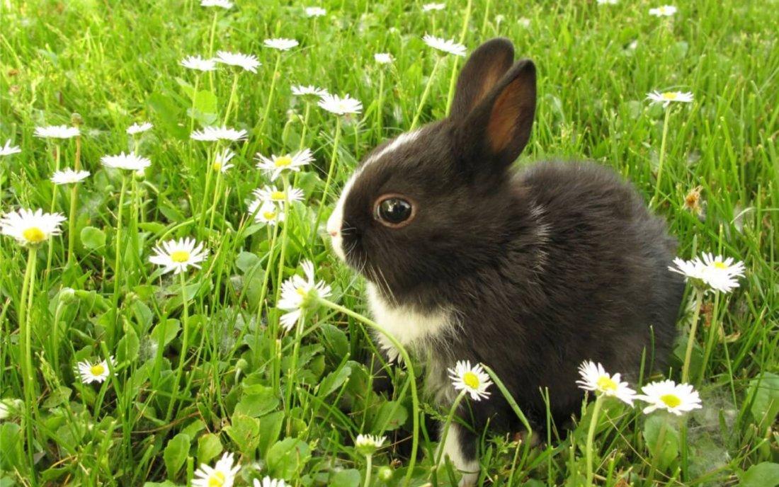 Здоровый крольчонок