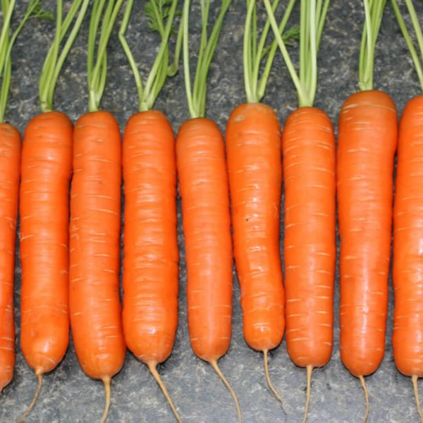 Морковь Шантенэ