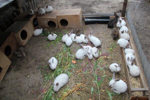 Болезни кроликов: список недугов, их симптомы и лечение