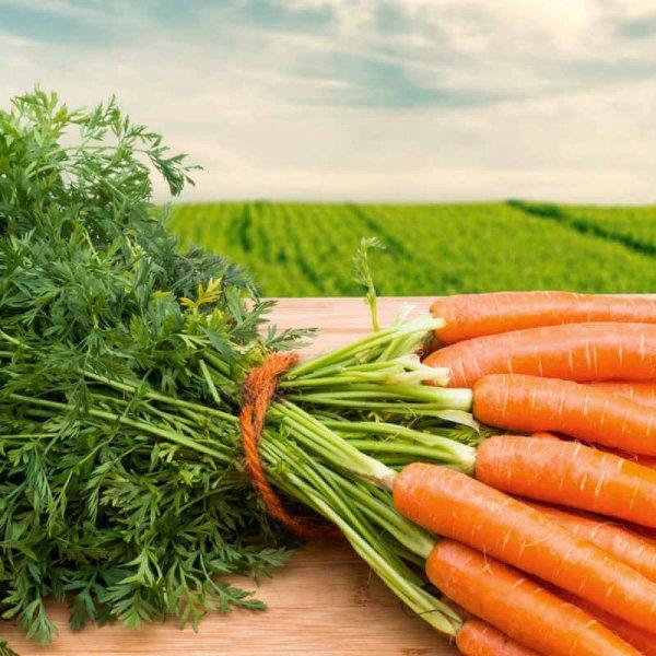 Сортовая морковь