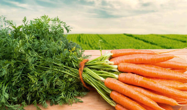 Морковь, лучшие сорта для открытого грунта: от чего зависит урожай
